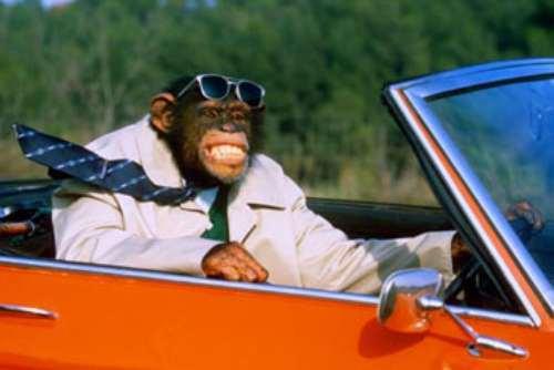 majmun-vozi.kola